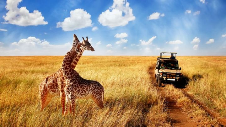 Ultimate Africa Bucket List – 101+ Things To Do In Africa