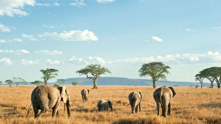 Why You Should Visit Africa