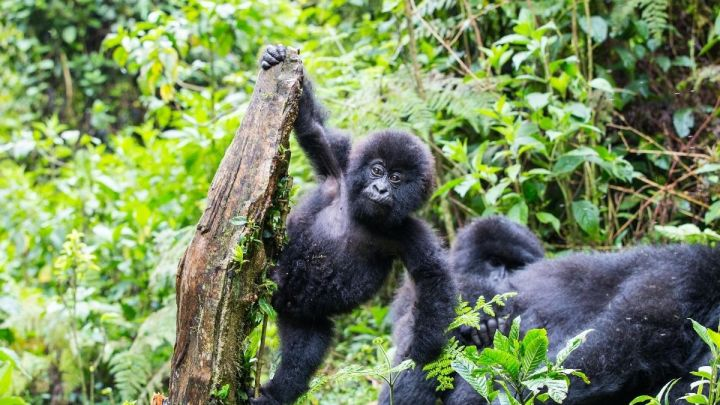Rwanda Bucket List – 30 Awesome Things To Do In Rwanda